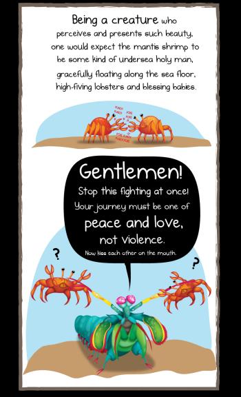 mantis_shrimp_4